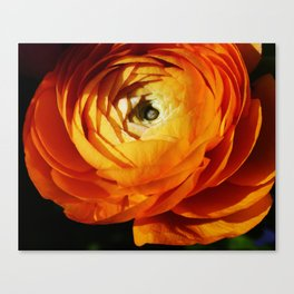 Introspective buttercup beauty Canvas Print