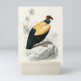 King vulture (Sarcoramphus papa) illustrated by Charles Dessalines D' Orbigny (1806-1876). Mini Art Print