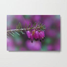 little pleasures of nature -7- Metal Print