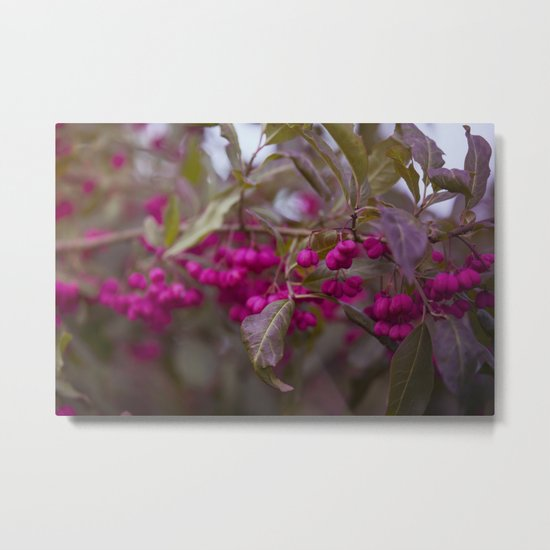 Fruits of Autumn in bold pink Metal Print