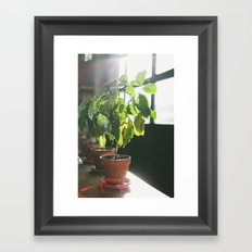 Potted Plant Framed Art Print