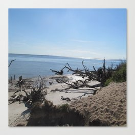 The Boney Trees on the Beach Canvas Print