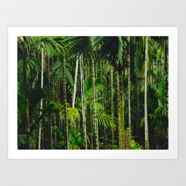 Tropical Bamboo Palm Forest Art Print