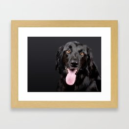 Black Hovawart Dog Tongue Out Framed Art Print