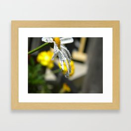 Dripping Daisy  Framed Art Print