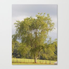 Country Weeping Willow Canvas Print