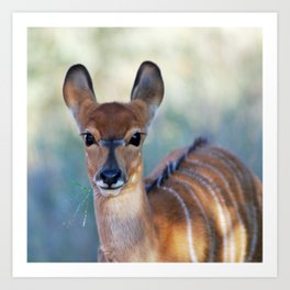 Nyala deer photo Art Print