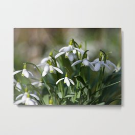 Floral Snowdrops! Metal Print