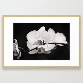 Orchid Classic Framed Art Print
