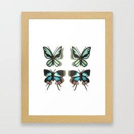 Flutterbies Framed Art Print