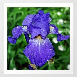 Cool blue-violet Iris 'Sea Master' Art Print