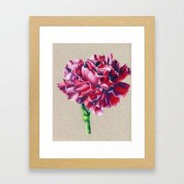 Carnation Framed Art Print