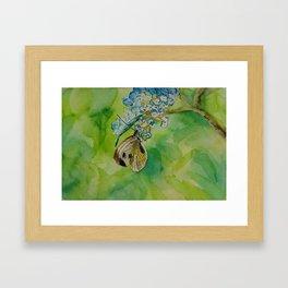 Summer butterfly Framed Art Print