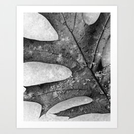 oak leaf and snowflakes Art Print
