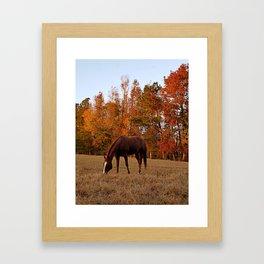 Horse Fall Days of Grazing Framed Art Print