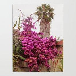 Fuchsia Garden Poster