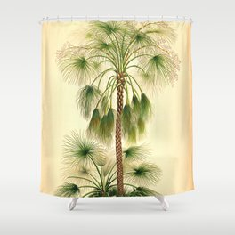 Vintage Botanical illustration, 1916 (Palm) Shower Curtain