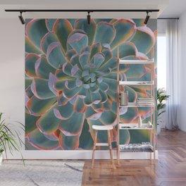 GREY-PINK ECHEVERIA SUCCULENT DESERT PLANT Wall Mural