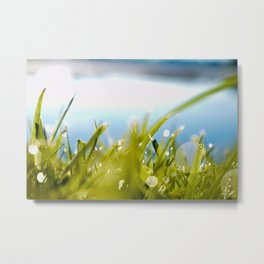 Dewy Days Metal Print