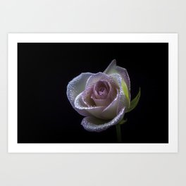flower photography by Carlos Quintero Art Print