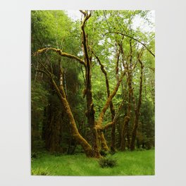 A Moos Laden Tree Poster