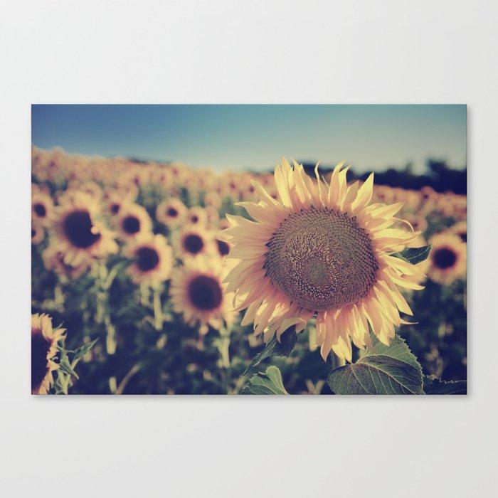 """""""Sunflowers"""" Vintage dreams Canvas Print"""