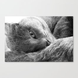 Ash Trey Canvas Print