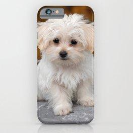 Maltese Puppy iPhone Case