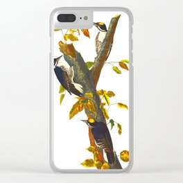 Three-toed Woodpecker Clear iPhone Case