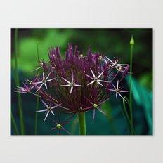 Allium Christophii Canvas Print