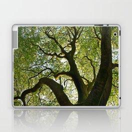 Beech Tree Canopy 2 Laptop & iPad Skin