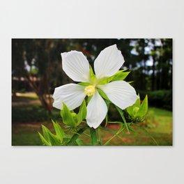White Swamp Hibiscus Canvas Print