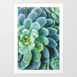 Succulent 01 Art Print
