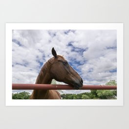 Profile of Brown Horse Looking over Fence with Clouds Art Print