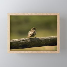 Single little bird on a fence, animal in the nature, spring birdie close up photography, nostalgia Framed Mini Art Print