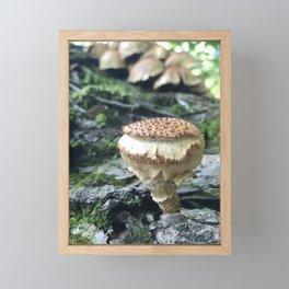 Pholiota Squarrosa Framed Mini Art Print