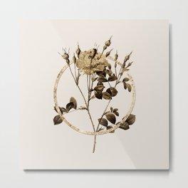 Gold Ring Anemone Flowered Sweetbriar Rose Glitter Botanical Illustration Metal Print