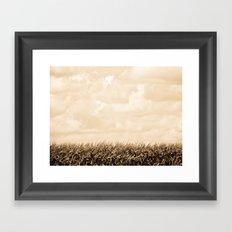 Summer Corn Stalks Framed Art Print