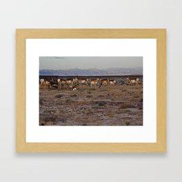 Pronghorn Framed Art Print