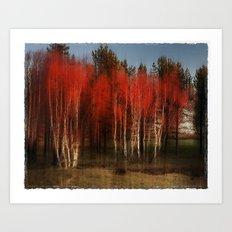 Autumn Birch Art Print