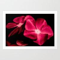 ruby Art Prints featuring Ruby by Loredana