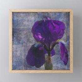 Captivating Iris Framed Mini Art Print
