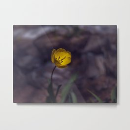 Yellow Tulip in The Forest Metal Print