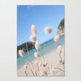 New Zealand Toitoi  Canvas Print
