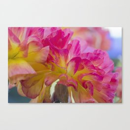 Red Pink and Yellow Mum SRF 16 5271 Canvas Print
