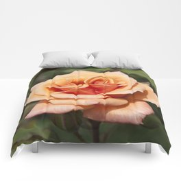 Beautiful Apricot Rose Comforters