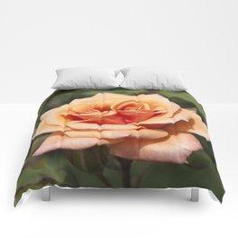 Beautiful Apricot Rose Comforters