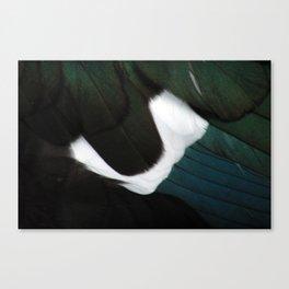 Russian Goose Plumage Macro Canvas Print
