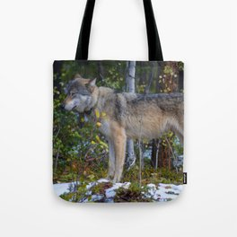 Wolf takes a moment of zen in Jasper National Park Tote Bag
