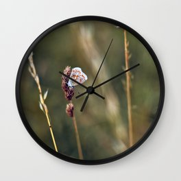 Brown Argus butterfly Wall Clock
